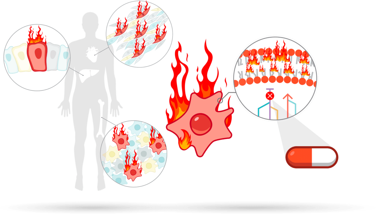 body with 3 zoomed in circles, a cell surrounded by flames, and a flaming cell structure next to a pill
